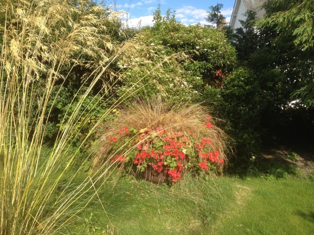 Grasses feature in Chelsea Fringe e-book project