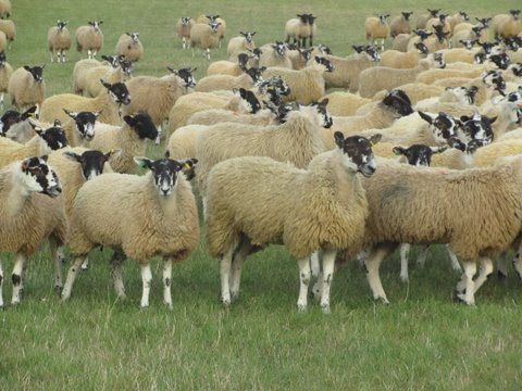 Don't let tack sheep outstay their welcome