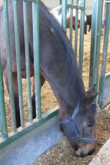 Horses prefer silage