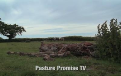 Watch Pasture Promise TV