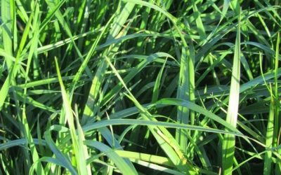 Waitrose joins initiative to make sustainable packaging from grass