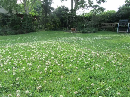 Clover is taking over, but this lawn is alive with the sound of buzzing bees.