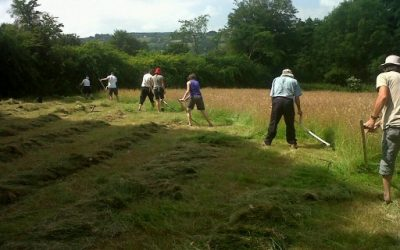 Traditional haymaking – hard work but good for the soul?