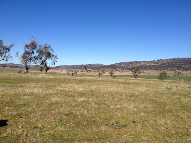 Native grasslands