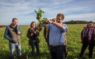 Herbal leys and livestock set to rejuvenate arable land in Hampshire