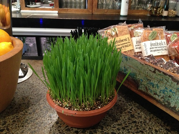 There was even wheatgrass growing on the counter of cafes and food shops – this as part of a wonderful display of home-grown/home-baked goodies at Matakana Kitchen.