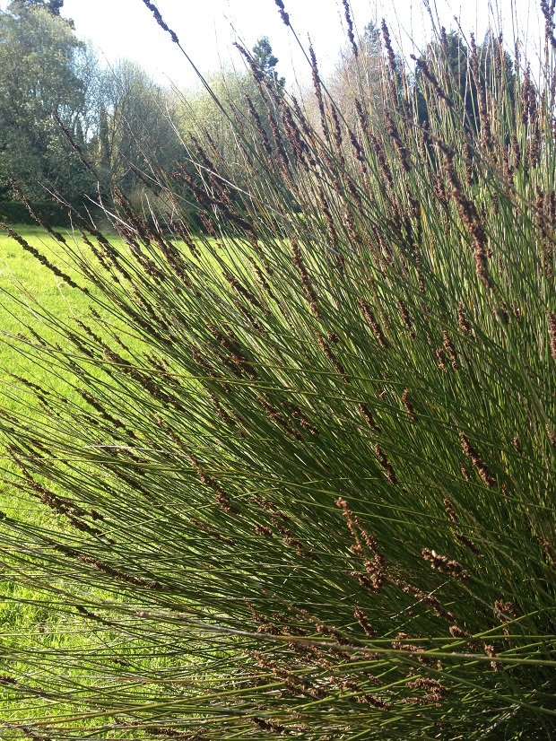 I visited the sublime Ayrlies Garden (south west of Auckland), an oasis of horticultural pleasure, ten acres lovingly developed from farmland – where grasses are used for their sculptural form, colour and contrast.