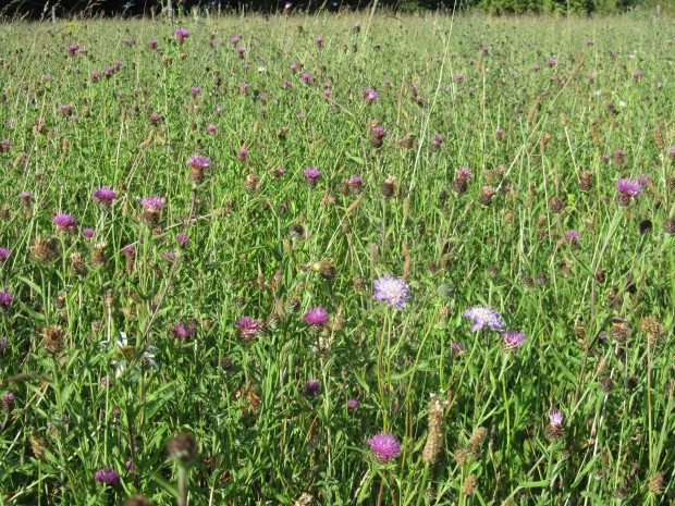 This area is teeming with insects and butterflies