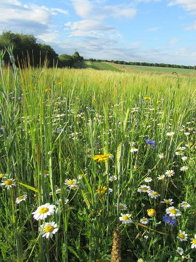 Never underestimate the value of flower meadows