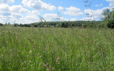 Manage grazing to protect precious grassland