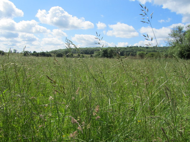 Manage grazing to protect precious grassland