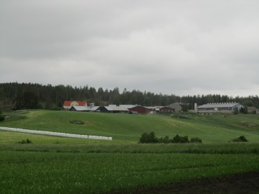 A typical Finnish dairy farm – note the brand new cow house (top right) and silage bales wrapped in white and stored on their flat end, one high.