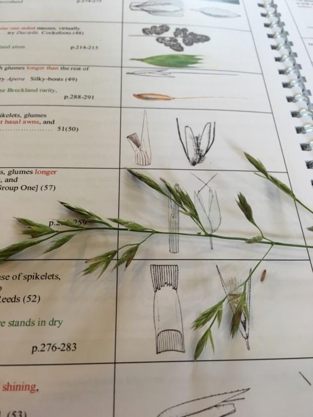 Grass ID 2