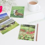 Grassy and Green Postcards