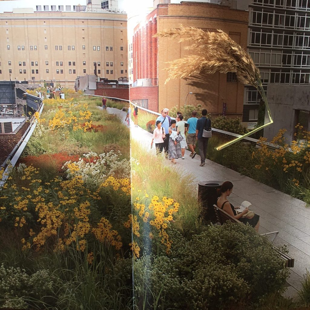 And back at home – a photo from a book I have on the High Line – with a seed head (top right) picked from the actual High Line!