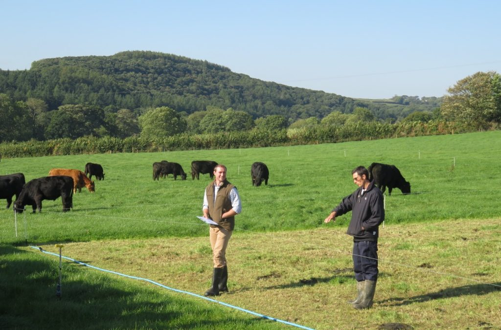 Techno-grazing UK style
