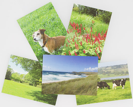 Grassy & Green Postcards