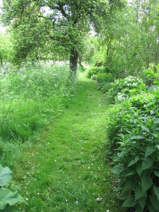 Same garden – different area, which is wild and woolly.