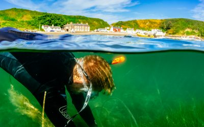 Restoring the meadows under the sea